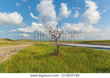 lonely dry tree near the road near a dried-up lake. A beautiful landscape with a road, blue sky, white linens, dry wood, and a dried-up lake.