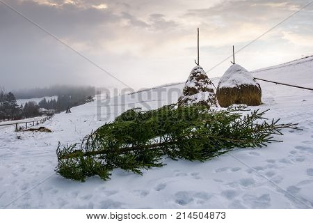 Spruce Trees And Haystacks On Snowy Hillside