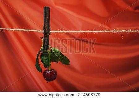 Still Life Cherry