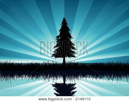 Solitary Fir Tree.Eps