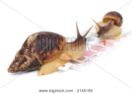 big brown snails and watercolors on the white background poster