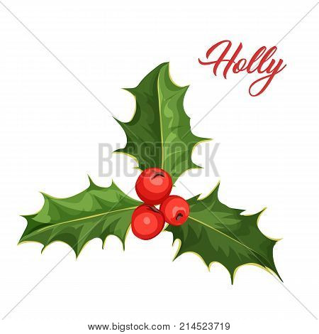 vector realistic hand drawn holly, ilex with berry and leaves, mistletoe . Christmas, new year holiday celebration symbol. Isolated illustration on a white background.