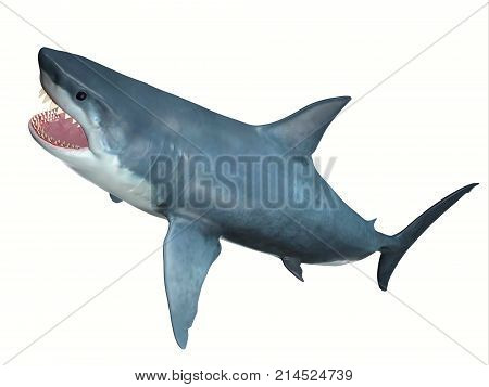 Carnivore Great White Shark 3d illustration - The Great White Shark is one of the largest predators in the ocean and inhabits temperate and warm coastal seas.