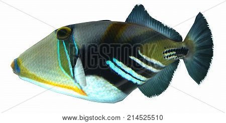 Humu Picasso Triggerfish 3d illustration - The Humu Picasso Fish is a saltwater species reef fish in tropical regions of Indo-Pacific oceans.