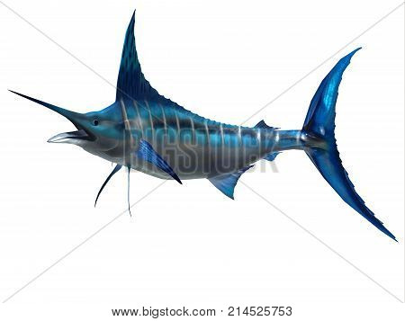 Marlin Sport Fish 3d illustration - The Blue Marlin is a favorite fish of sport fishermen and one of the predators of the Atlantic and Pacific oceans.