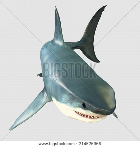 Overview Great White Shark 3d illustration - The Great White Shark is one of the largest predators in the ocean and inhabits temperate and warm coastal seas.