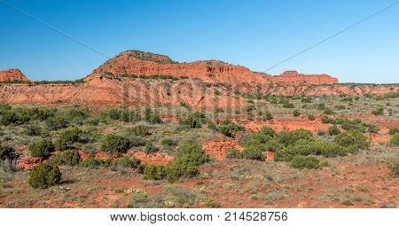 Palo Duro Canyon in the Texas panhandle near Amarillo with desert foliage and red rock wall in the background.