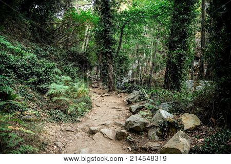 A scenic hiking trek through the forest to Caledonia waterfall near Platres central Cyprus