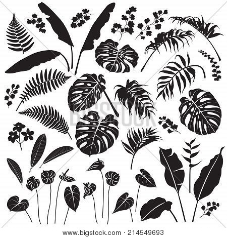 Tropical plant set. Black silhouettes of palm leaves banana plants monstera tropic flowers isolated on white background. Vector flat illustration.
