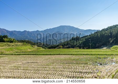 Beautiful panoramic view of green agriculture rice field with mountains in the background in bright day light starting of Autumn in Nagano central Japan.