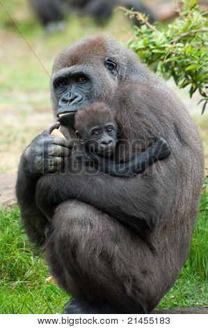 Gorilla And Her Baby
