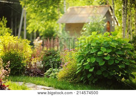 Mixed garden border with blooming spirea japonica Yellow Princess Hydrangea Annabell hostas and heucheras in sunny summer day