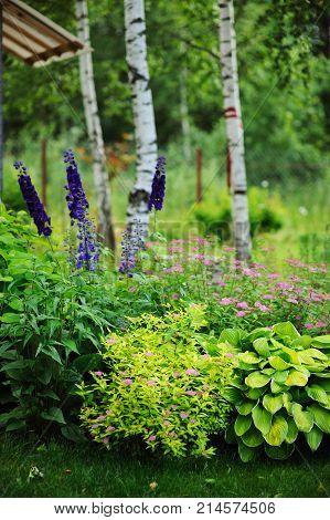 mixed perennial border with hostas spirea japonica delphinium and other perennials in summer garden