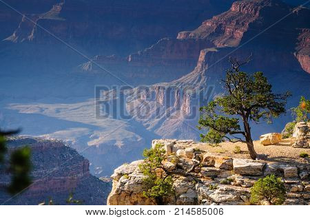 A tree on the southern rim of the Grand Canyon.