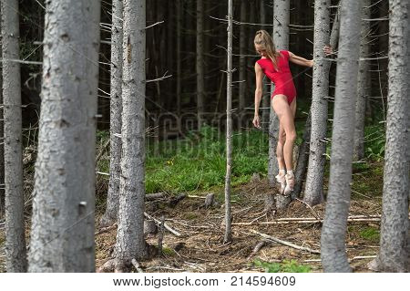 Tender ballerina stands on pointes near the dry tree on the background of the coniferous forest. She wears a red leotard and light ballet shoes. Girl holds left hand on the tree and looks downward.