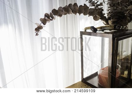 Dried brown eucalyptus leaves on the branch stock photo
