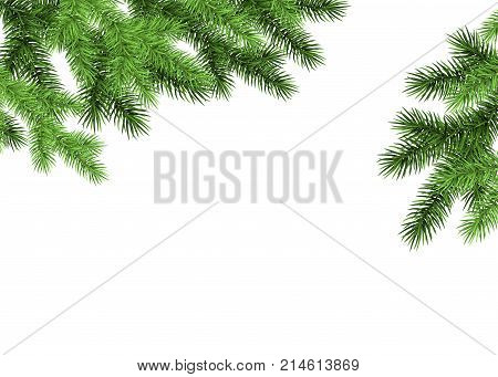 Spruce Branch On White Background.