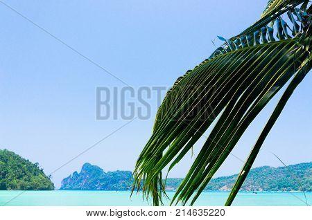 Under Trees Coconut Getaway