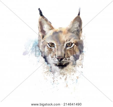 Digital Painting of Watercolor lynx.