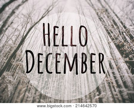 Blurry  winter park on background and text Hello december on foreground