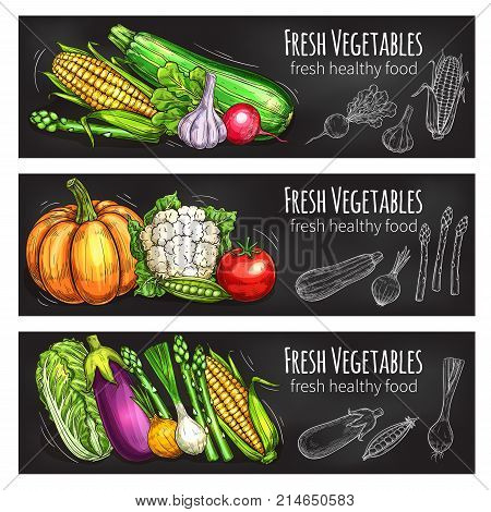 Vegetable and bean fresh food chalkboard banner set. Veggies chalk sketch with tomato, onion, garlic, cabbage, radish, eggplant, corn, pea, pumpkin, asparagus, cauliflower for vegetarian food design