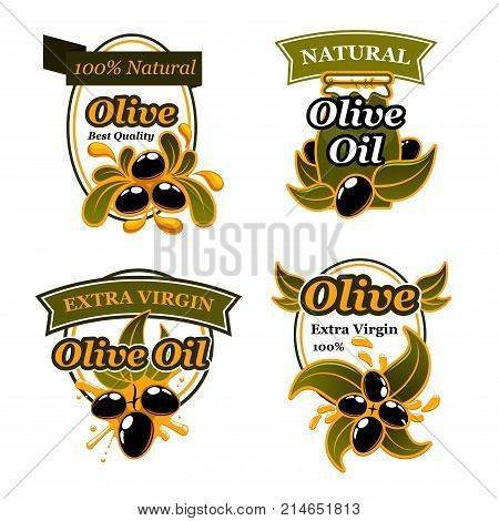Olive oil label and badge set with black olive fruit and oil splash. Olive tree branch with ripe fruit and green leaf emblem, decorated by oil drop and ribbon banner for natural organic food design
