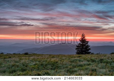 Single Pine Tree Stands Above Mountains At Sun Rise