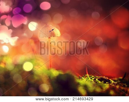 Mysterious Wild Muschroom In Lighting Forest. Surreal Light. Moss And Fairytale Mushroom