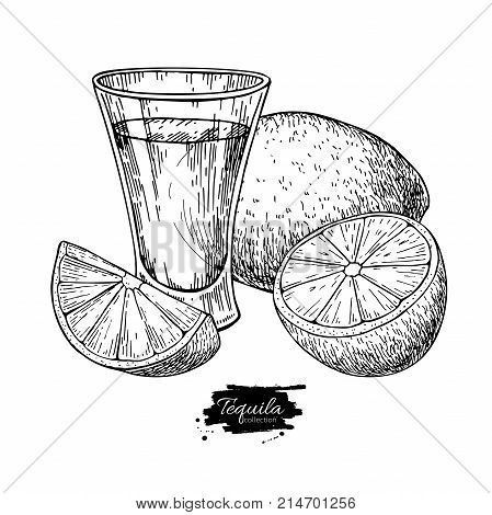 Tequila shot glass with lime. Mexican alcohol drink vector drawing. Sketch of shot glass cocktail with citrus fruit slice. Engraved illustration for label, icon, bar or restaurant menu.