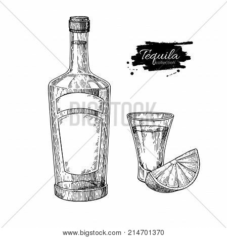 Tequila bottle and shot glass with lime. Mexican alcohol drink vector drawing. Sketch of shot glass cocktail with citrus fruit slice. Engraved illustration for label, icon, bar or restaurant menu.