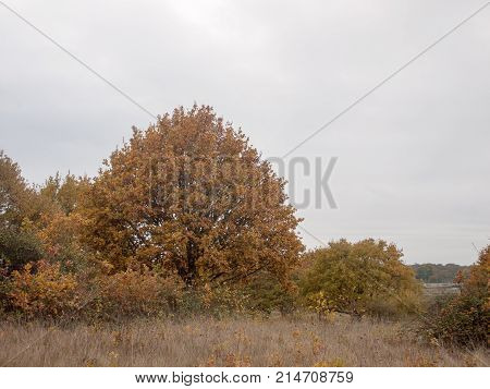 Autumn Red Orange Tree Leaves Brown Autumn Overcast Moody Sky Background Space Country Landscape