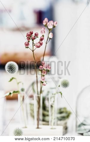 Graceful pink flowers and plants arrangement in glass test tubesstanding ikebana in laboratory light background. Minimal elegant composition. Concept of biological research biotechnology natural research making perfumes scientific experiment