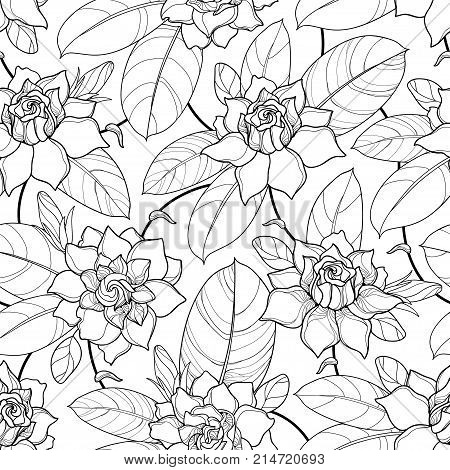 Vector seamless pattern with outline Gardenia. Ornate flower, bud and leaves in black on the white background. Floral pattern with Gardenia in contour style for summer design and coloring book.
