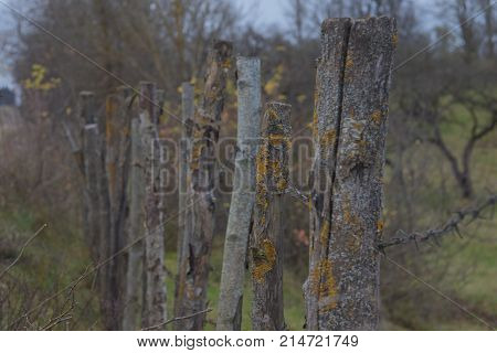 Closeup High Old Wooden Fence Of Logs In Form Of Palisade Vanish Into Space In Countryland
