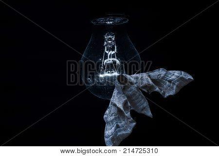 A fat moth sits in the dark on a dimly lit lightbulb