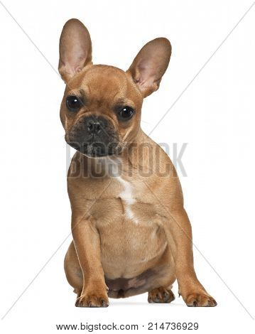 French Bulldog puppy, 5 months old, sitting against white background