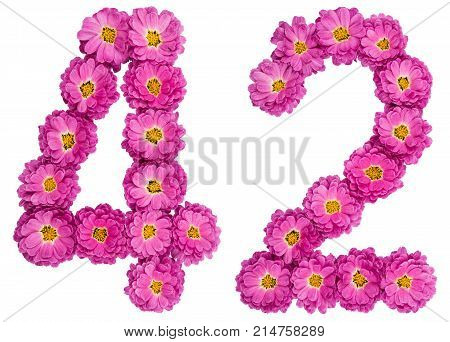 Arabic Numeral 42, Forty Two, From Flowers Of Chrysanthemum, Isolated On White Background