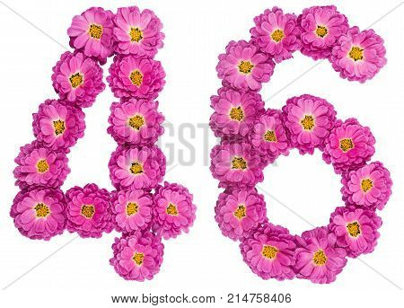 Arabic Numeral 46, Forty Six, From Flowers Of Chrysanthemum, Isolated On White Background
