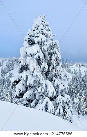 White Christmas. Mount Hood ski resort after snowfall. Portland. Oregon. United States.