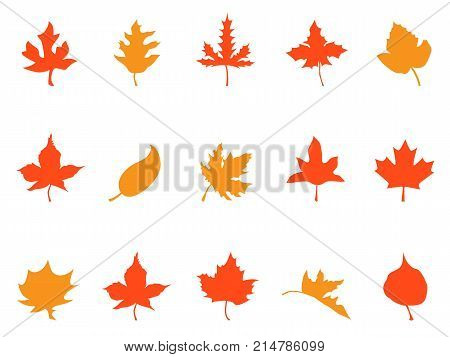 isolaetd color autumn leaves patterns icons from white background