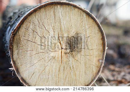 Close up on Tree Cutting Photo. Felled tree.