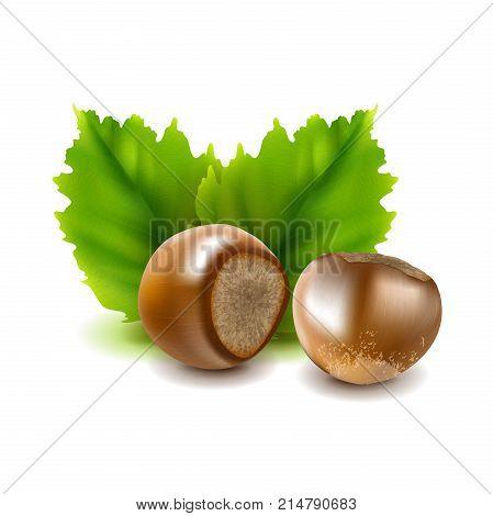 Photo-realistic vector illustration. Hazelnuts Filberts with leaves. Vector illustration.