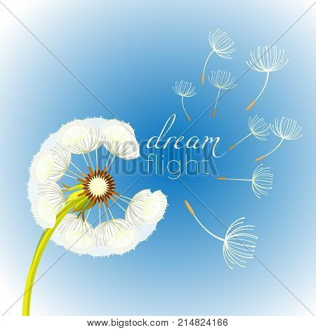 Blowing dandelion flower with fragile flying parts on green stem vector illustration . Soft blowball icon realistic design