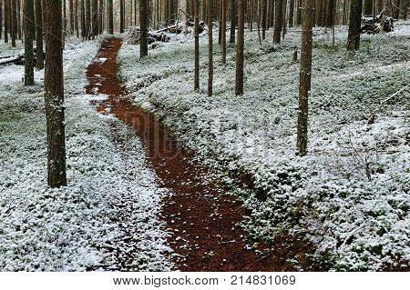 trailway in the forest in winter in the northwest of Russia