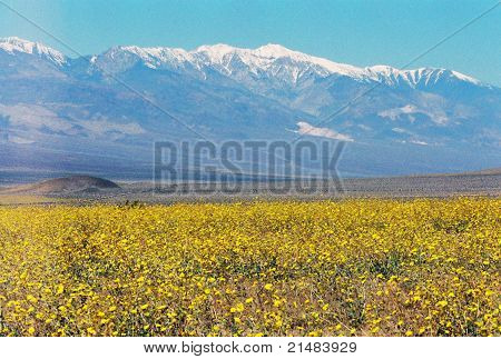 Death Valley during spring time