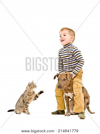 Happy kid playing with a puppy pitbull and cat Scottish Straight, isolated on white background