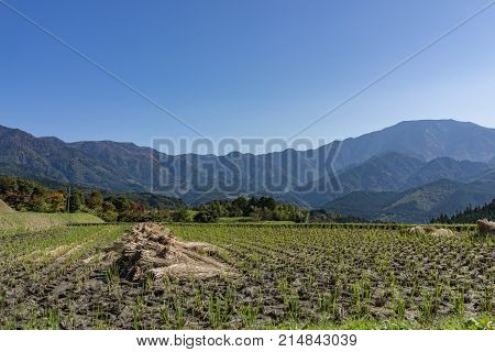 Beautiful panoramic view of havested agriculture rice field with mountains in the background in bright day light starting of Autumn in Nagano central Japan.