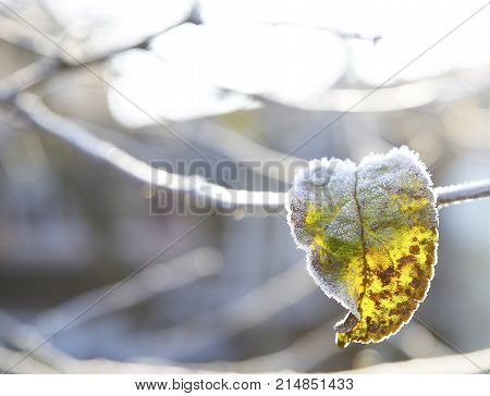The Beginning Of Frost In Nature