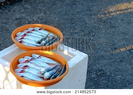 fisherman catch fish sardines sell in Istanbul