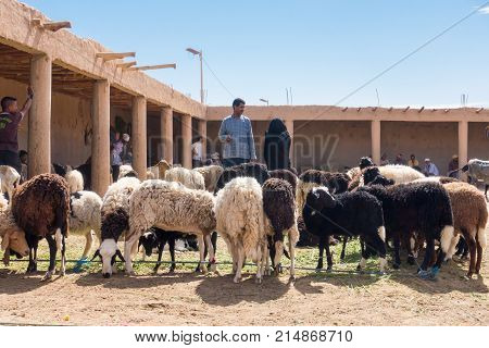 Rissani Morocco - May 09 2017:Two Moroccans are looking at sheep at the sheep market in Rissani Morocco Africa.